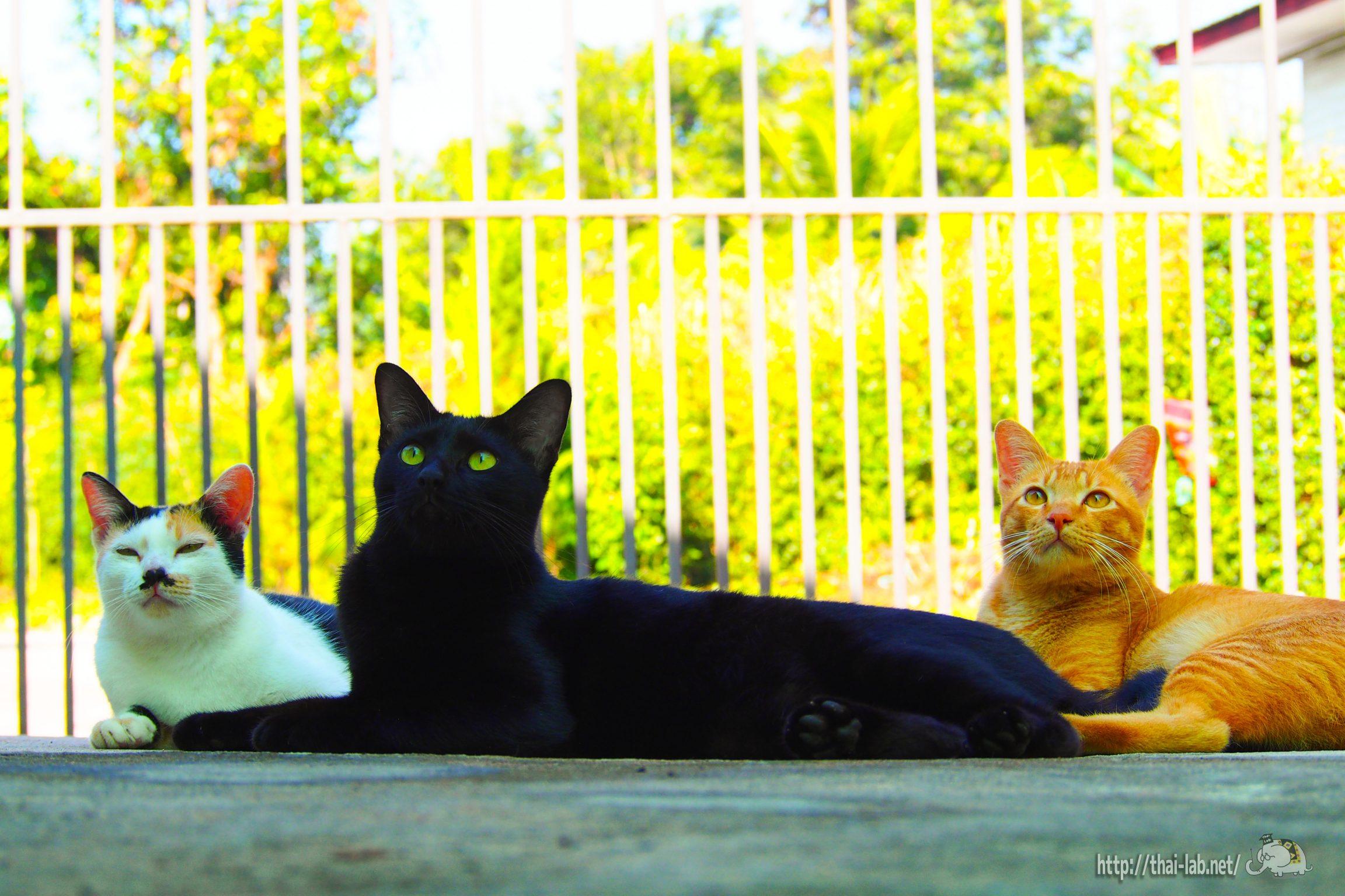 うちの猫たち【ネコラボ#01】