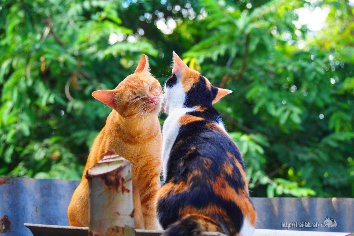 タイで見かけた可愛い猫たち【ネコラボ#04】