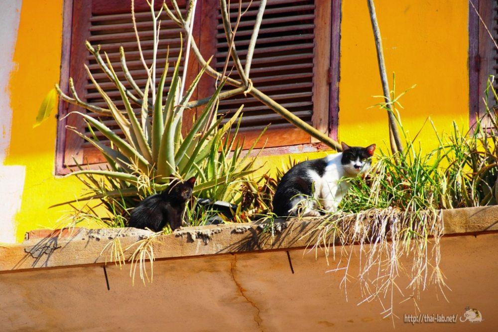 ビエンチャンの古い街並みで見かけたネコたち【ネコラボ#10】