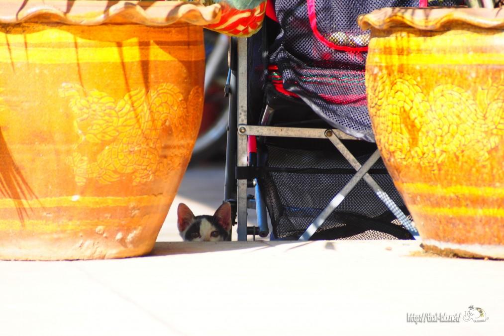 ラオス ビエンチャンで見かけた親子ネコ【ネコラボ#11】