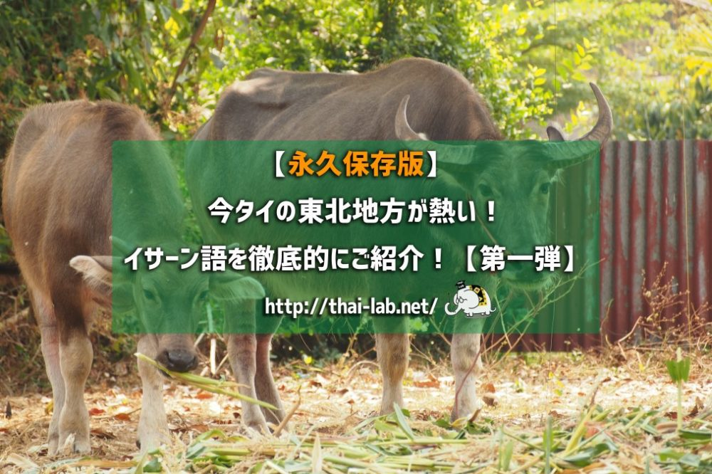 【永久保存版】今タイの東北地方が熱い!イサーン語を徹底的にご紹介!【第一弾】