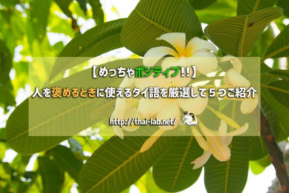 【めっちゃポジティブ!!】人を褒めるときに使えるタイ語を厳選して5つご紹介!