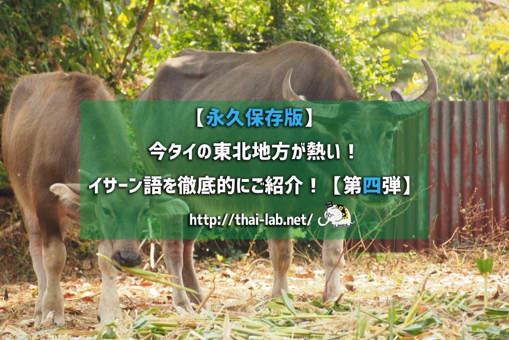 【永久保存版】今タイの東北地方が熱い! イサーン語を徹底的にご紹介!【第四弾】