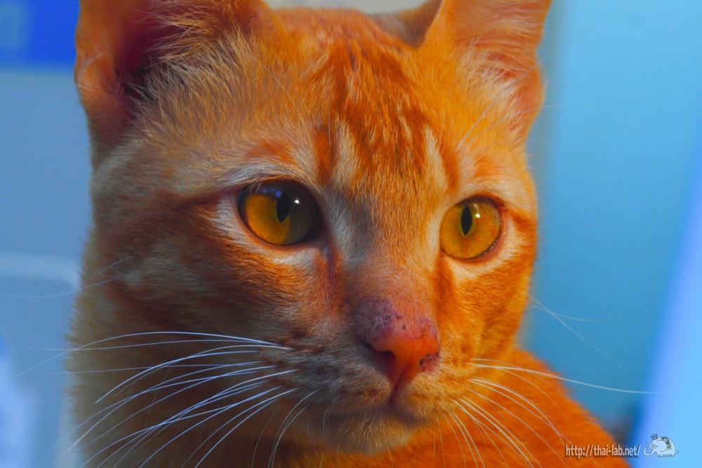 裏庭を見る猫たち【ネコラボ#15】