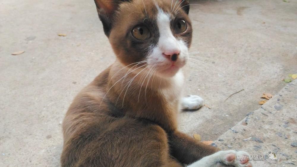 小さな商店で見かけたブラウン猫【ネコラボ#20】