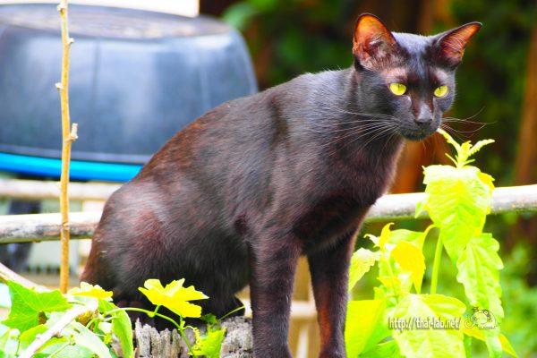 かわいい黒猫「マクロ」特集【ネコラボ#23】