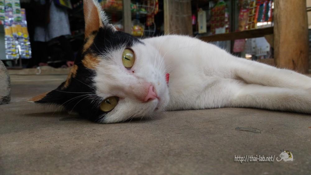 近所の小さな商店で見かけた三毛猫【ネコラボ#22】