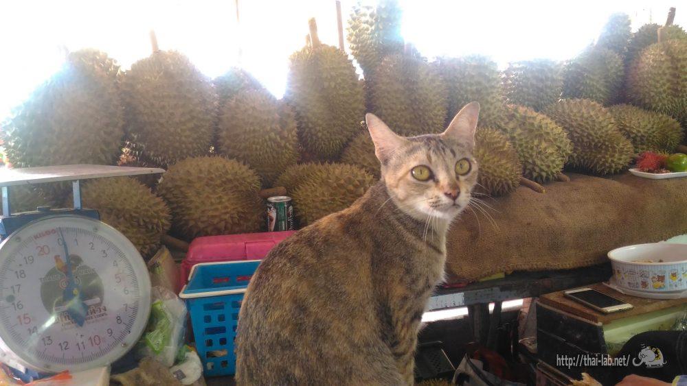 ここ最近見かけたタイの猫たち【ネコラボ#27】
