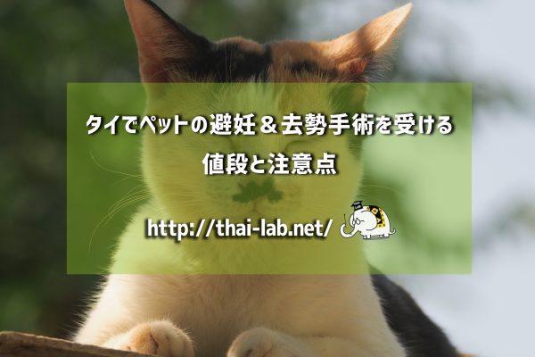 タイでペットの避妊&去勢手術を受ける値段と注意点