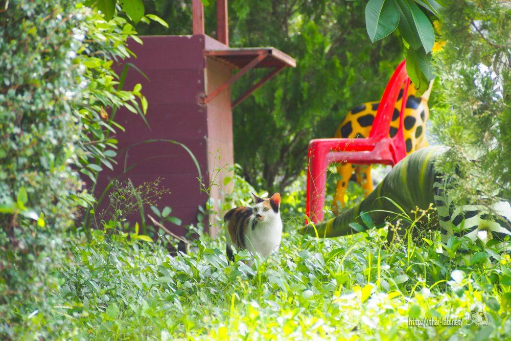 2017/08 我が家の猫たち 【ネコラボ#29】