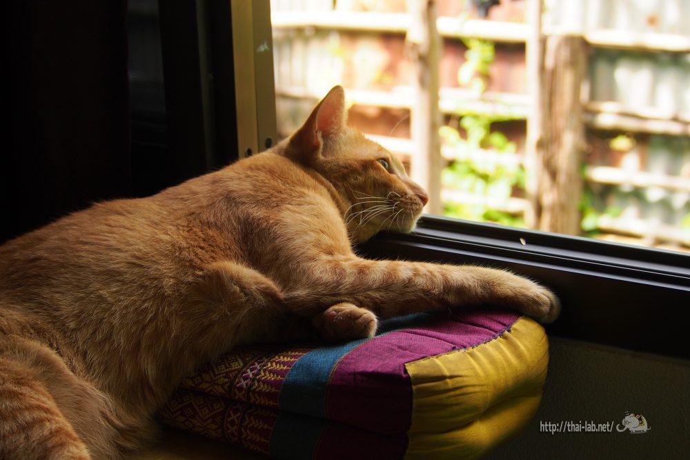 2017年8月29日 フェンス越しの猫たち 【ネコラボ#30】