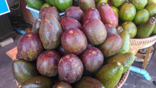 ラオスのビエンチャンでは今まさに「アボカド」が旬!買って食べてみた。