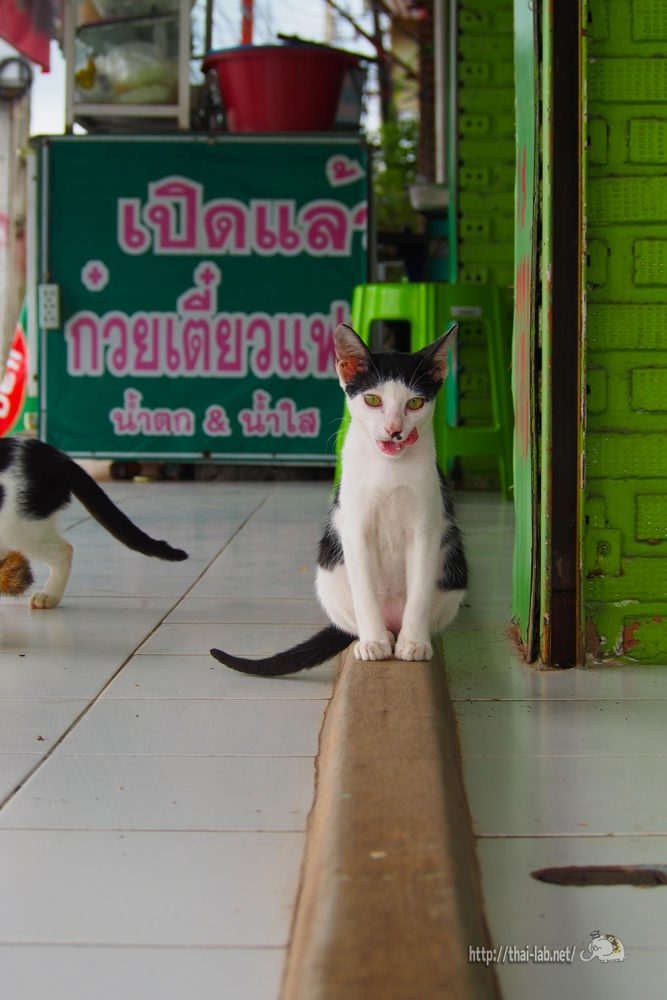 クイッティアオ屋で見かけた猫の家族【ネコラボ#32】