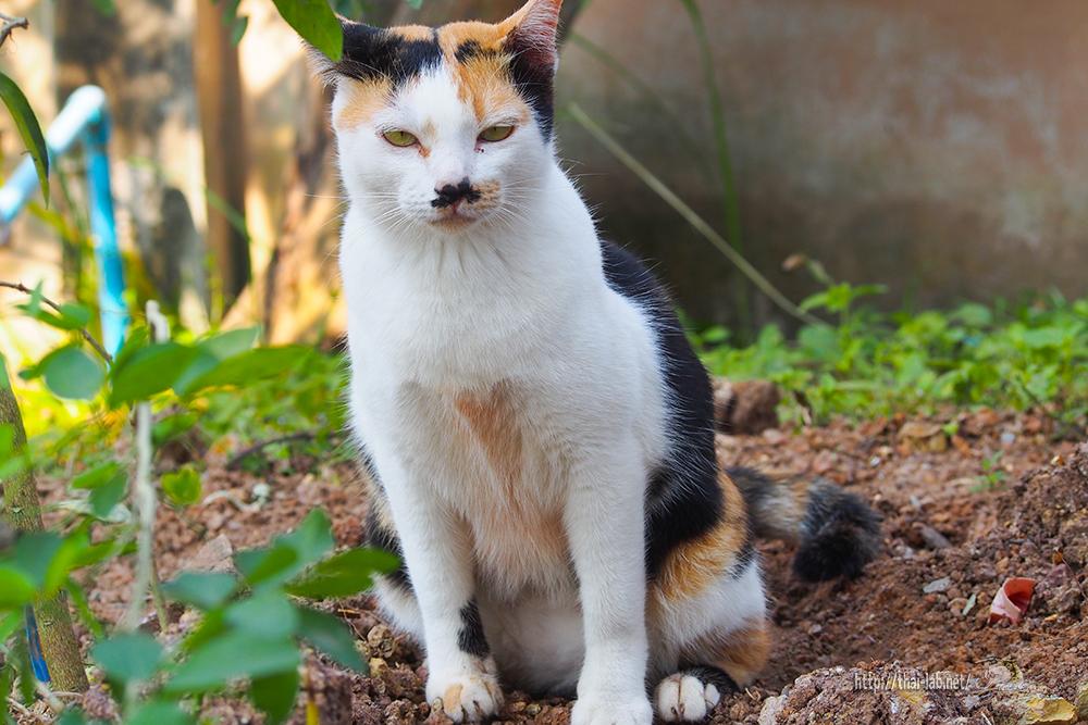 突然のヨソ猫訪問「ネコラボ#34」