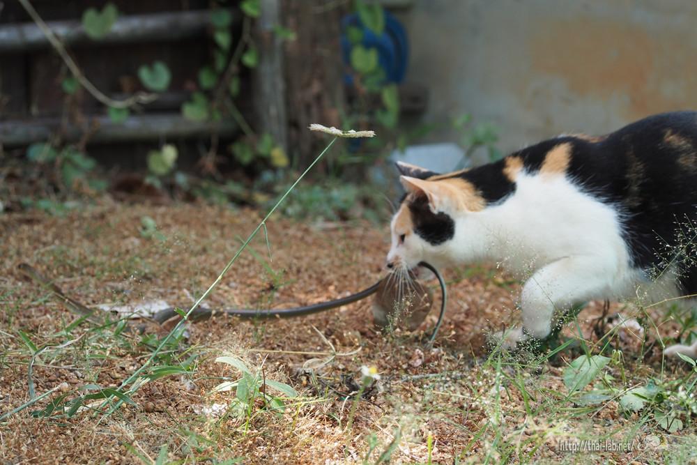 ちょっと閲覧注意 ヘビをとらえる猫たち 【ネコラボ#36】