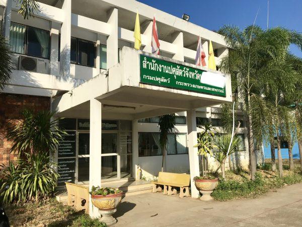 タイでペットの避妊手術を格安価格で受ける方法【半額以下】