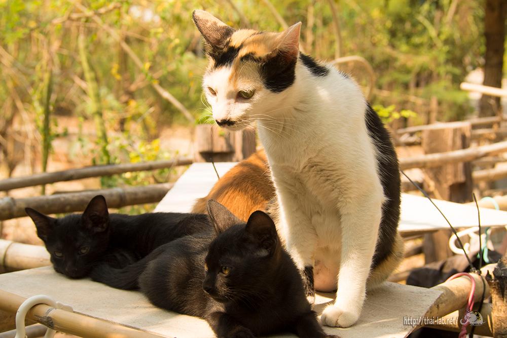 近所で見かけた猫たち & 我が家の猫たちに関するご報告【ネコラボ#37】