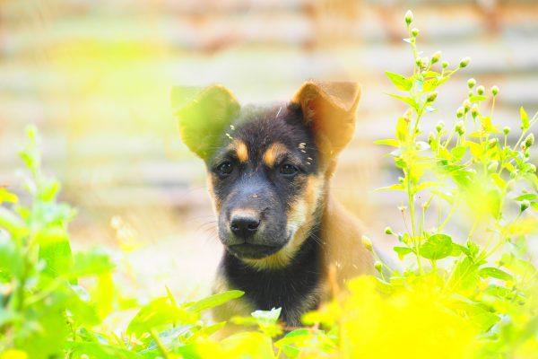 【最新情報】狂犬病が流行しているタイ国内13の県が発表される!!