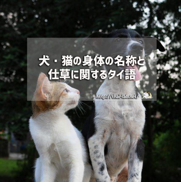 犬・猫の身体の名称と仕草に関するタイ語