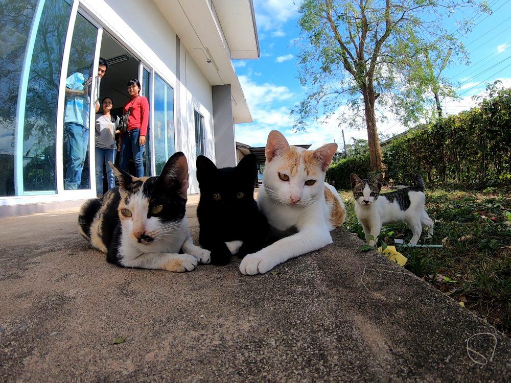 めっちゃ仲良し!タイで見かけた猫の家族【ネコラボ#46】