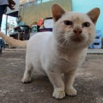 【2/22は猫の日】近所で見かけた子猫がのんびりしすぎてて可愛い!!【ネコラボ#47】