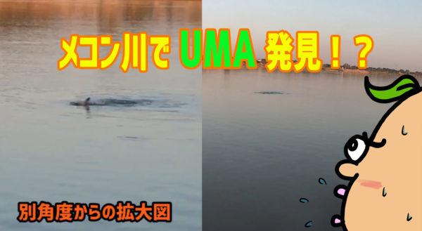 【激撮】タイのメコン川で未確認生物「UMA」発見!?