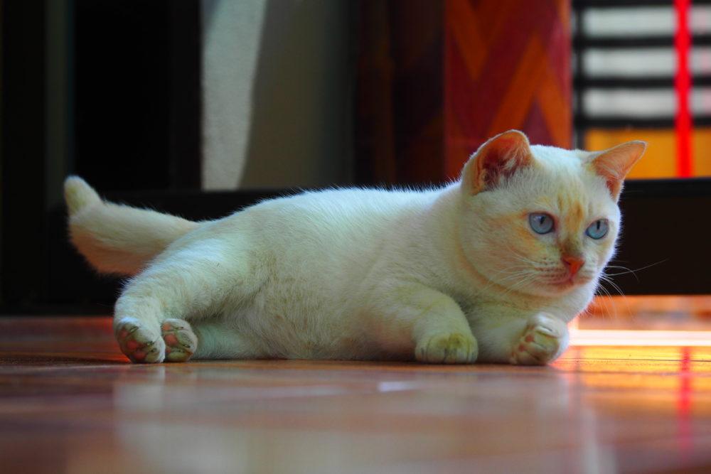 ちょっと変わってる我が家の「モチ」 もしかして「奇跡の猫」かも!?