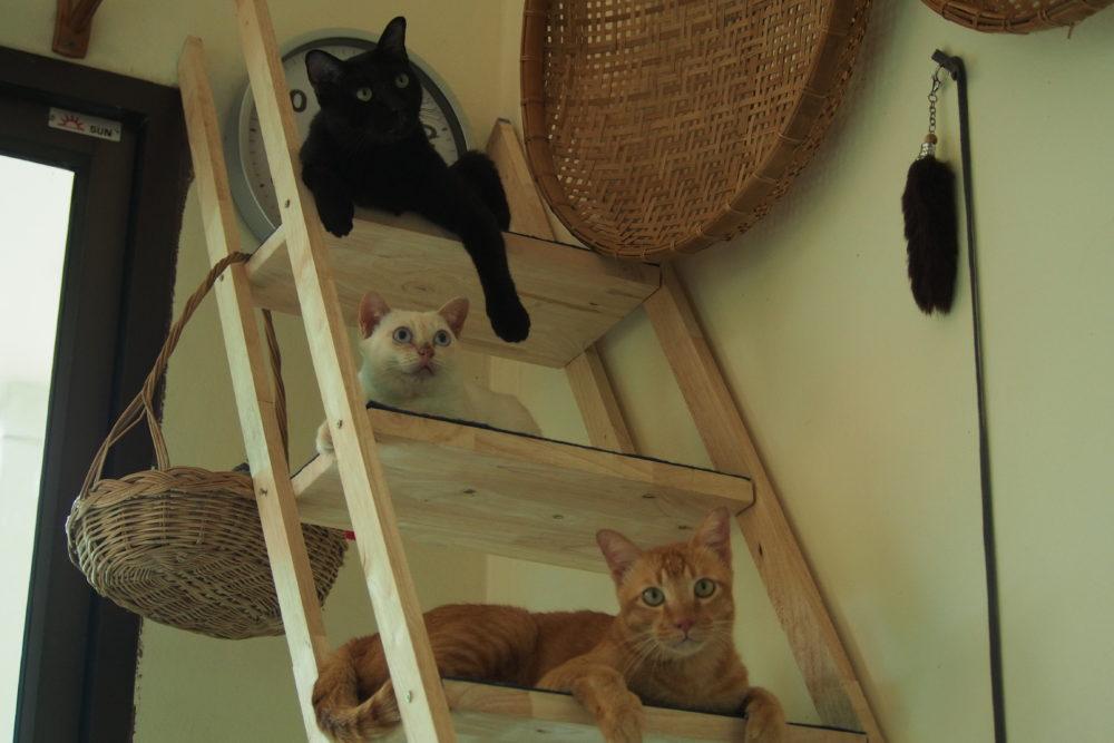 猫タワーとネコたち【ネコラボ#53】