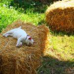 藁(わら)の上で遊ぶ猫たちが可愛すぎる!【ネコラボ#54】