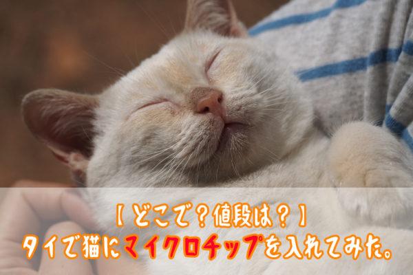 【どこで?値段は?】タイで猫にマイクロチップを入れてみた。