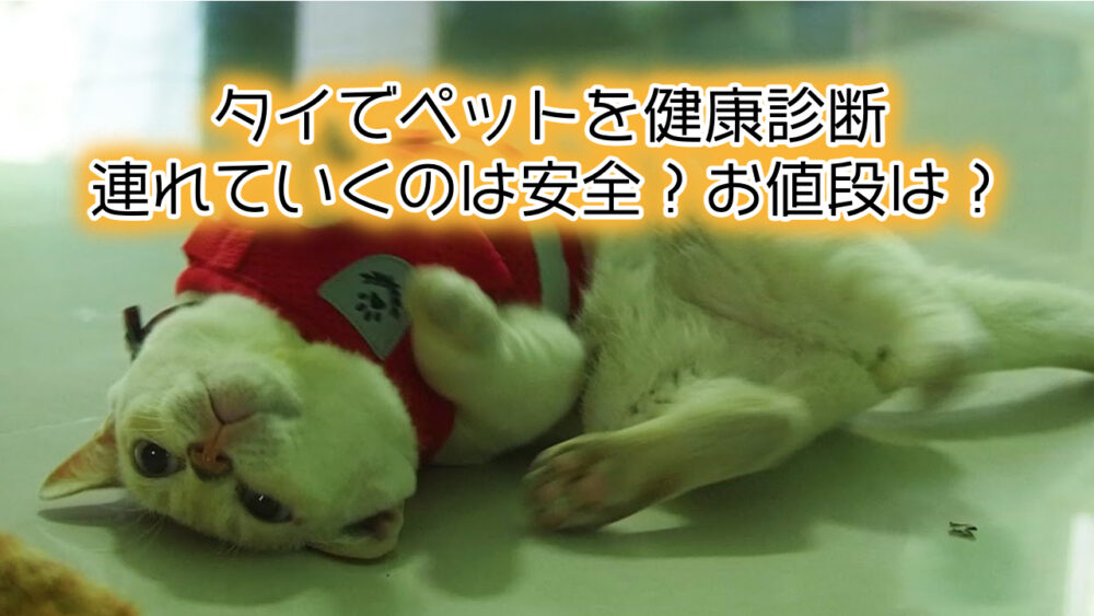 【犬猫】タイでペットを健康診断に連れていくのは安全?お値段は?